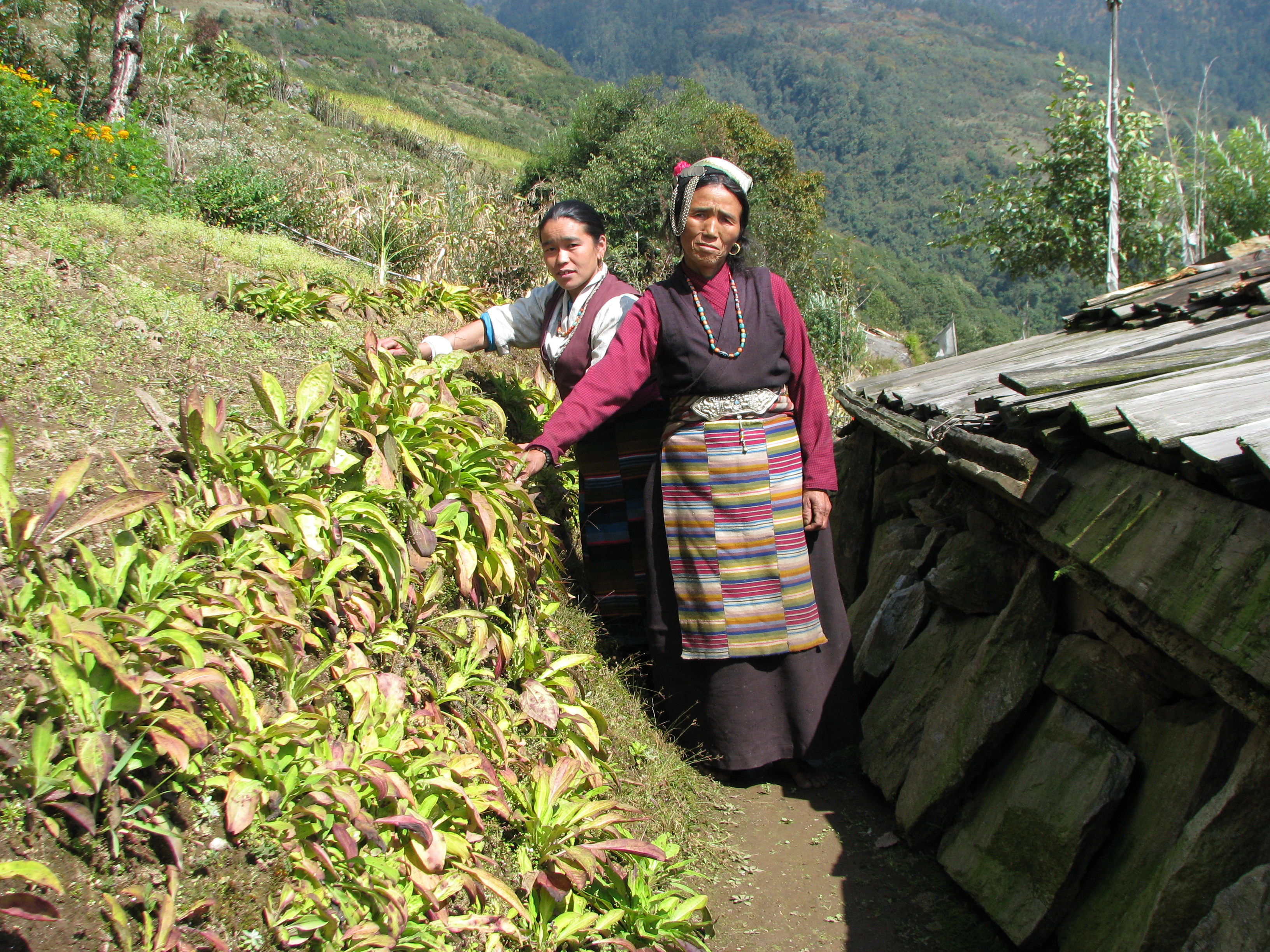 Community Livelihoods & Enterprise
